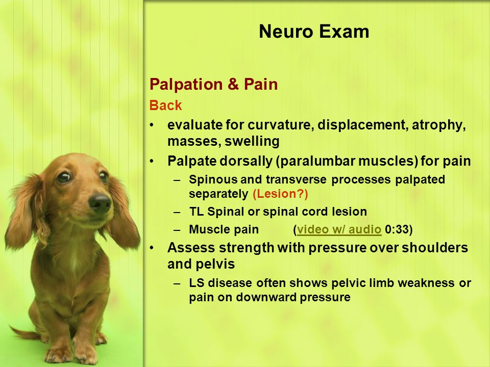Neuro Exam Palpation & Pain Back