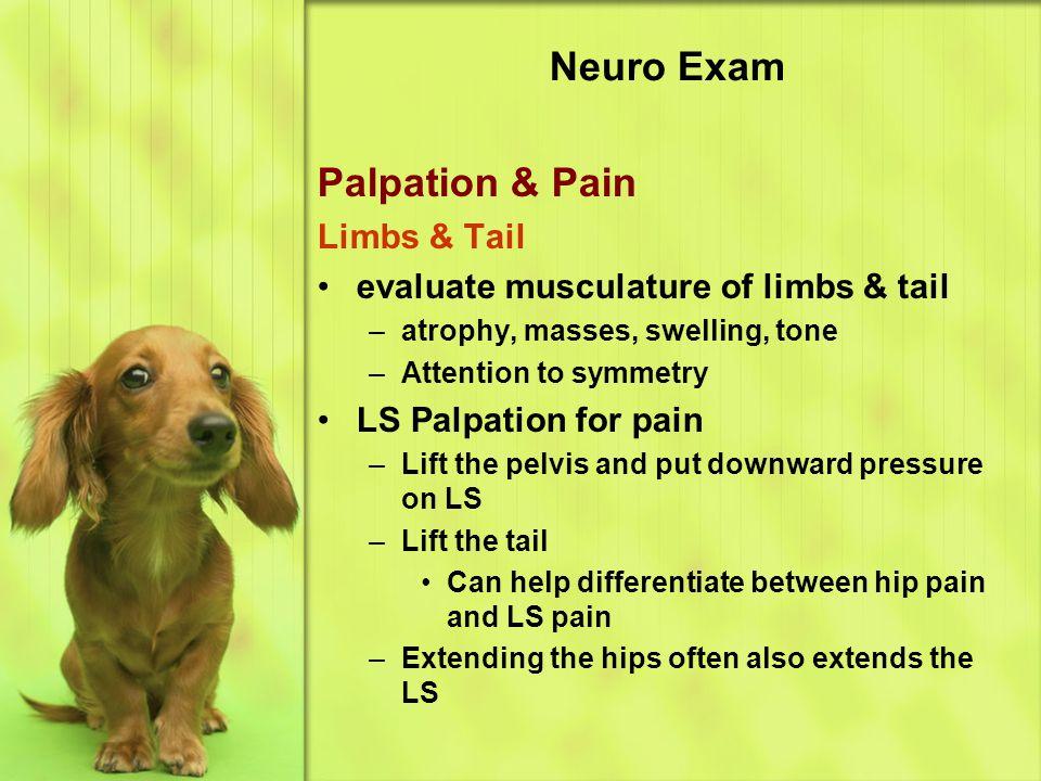 Neuro Exam Palpation & Pain Limbs & Tail