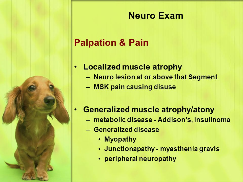 Neuro Exam Palpation & Pain Localized muscle atrophy