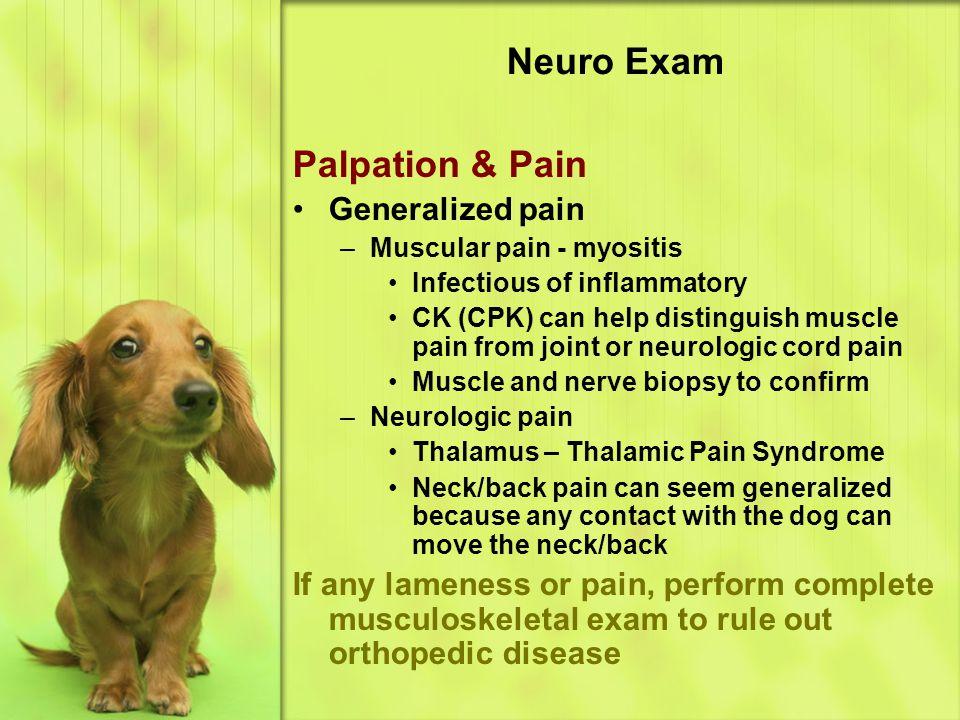 Neuro Exam Palpation & Pain Generalized pain