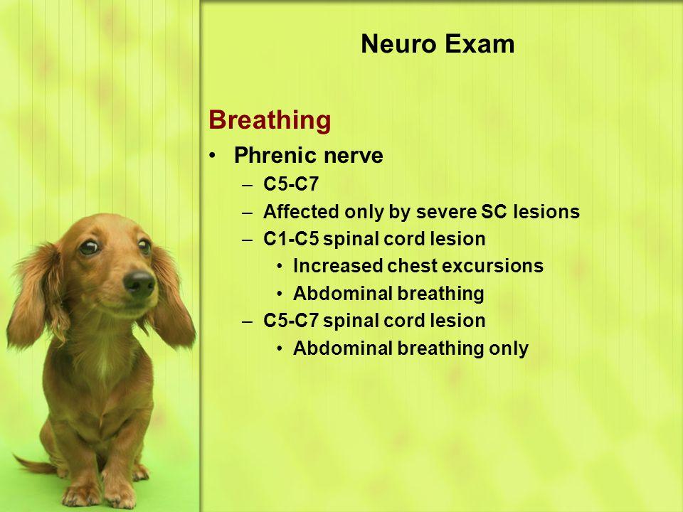 Neuro Exam Breathing Phrenic nerve C5-C7