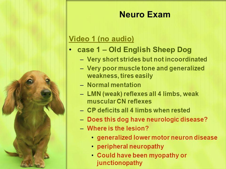 Neuro Exam Video 1 (no audio) case 1 – Old English Sheep Dog