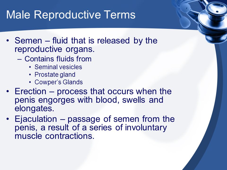 Male Reproductive Terms
