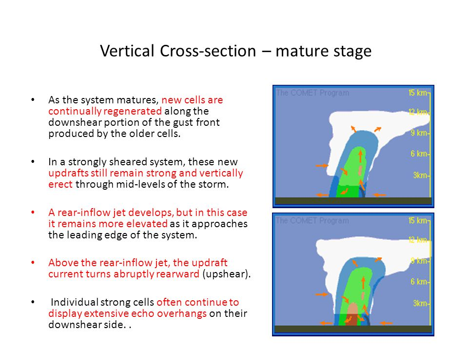 Vertical Cross-section – mature stage