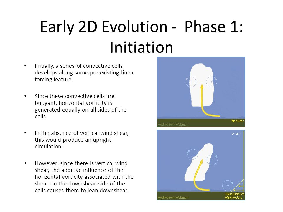 Early 2D Evolution - Phase 1: Initiation