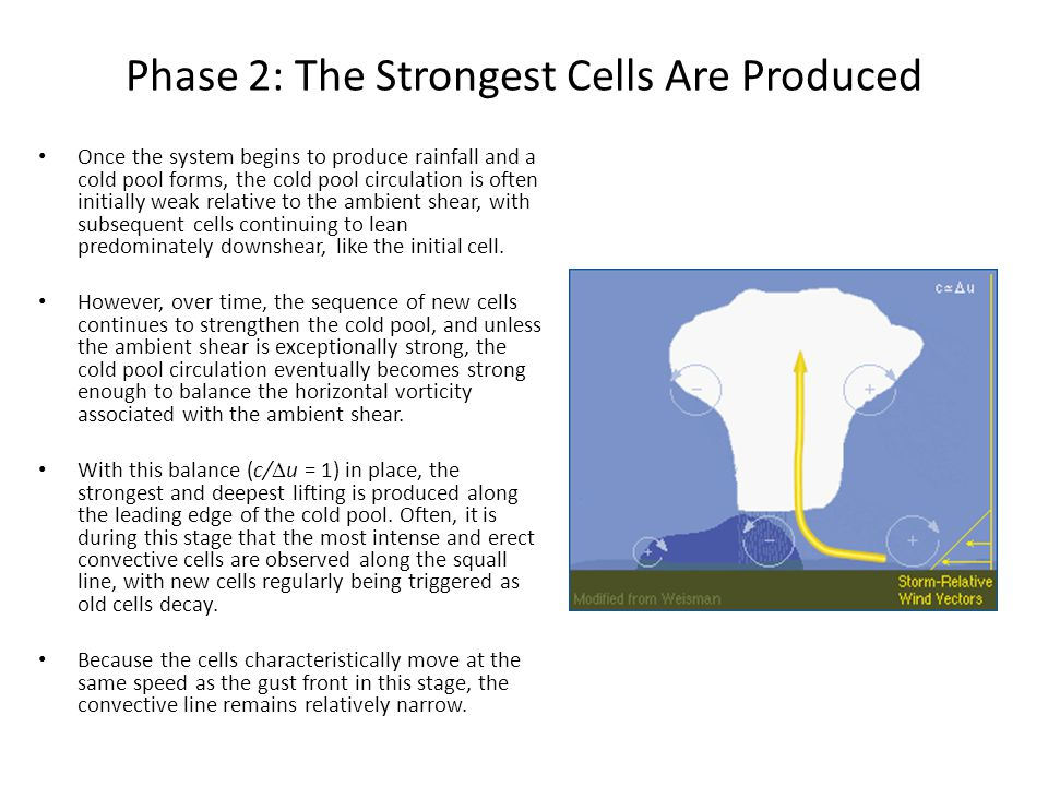 Phase 2: The Strongest Cells Are Produced