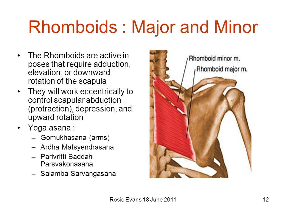 Rhomboids : Major and Minor