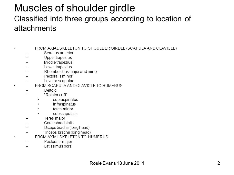 Muscles of shoulder girdle Classified into three groups according to location of attachments