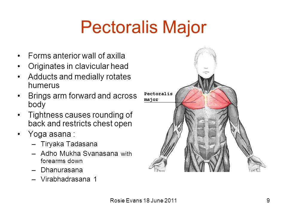 Pectoralis Major Forms anterior wall of axilla
