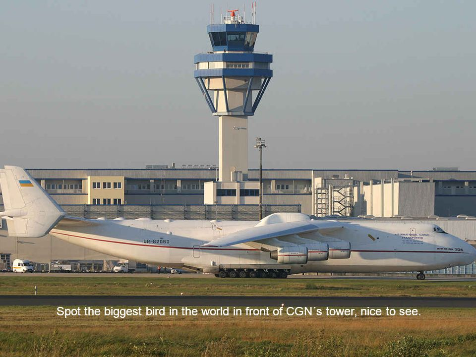Spot the biggest bird in the world in front of CGN´s tower, nice to see.