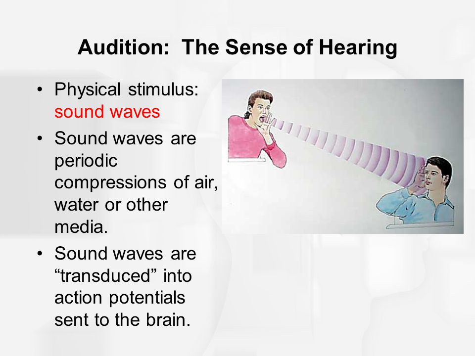 Audition: The Sense of Hearing