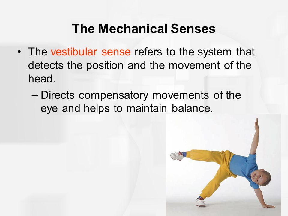 The Mechanical Senses The vestibular sense refers to the system that detects the position and the movement of the head.