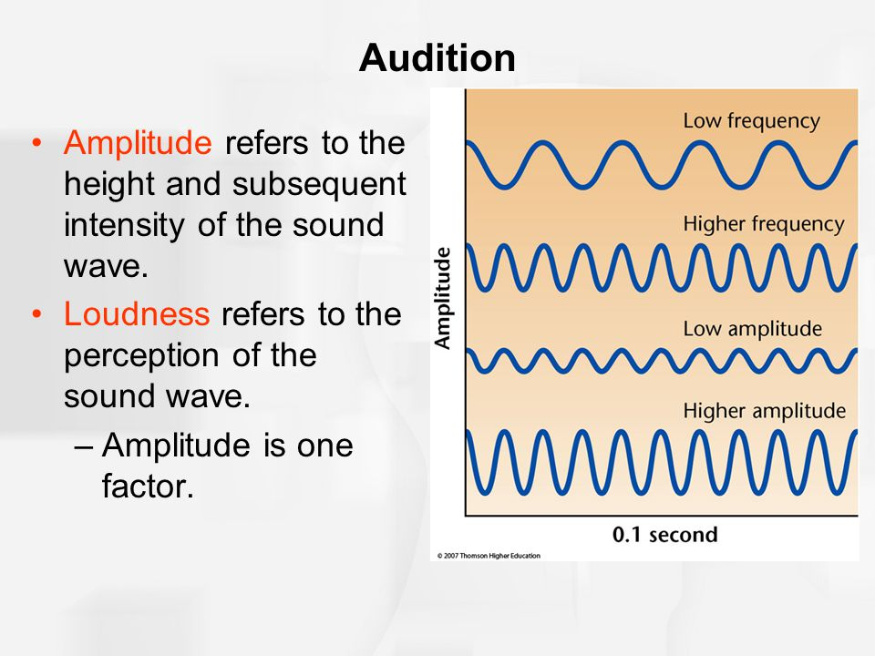 Audition Amplitude refers to the height and subsequent intensity of the sound wave. Loudness refers to the perception of the sound wave.