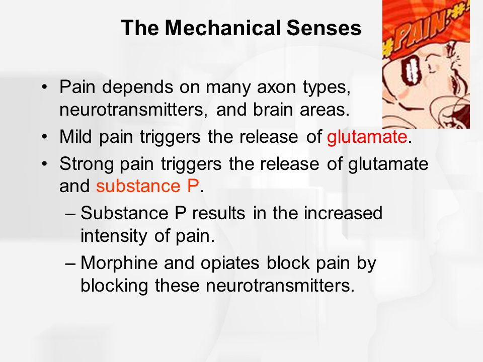 The Mechanical Senses Pain depends on many axon types, neurotransmitters, and brain areas. Mild pain triggers the release of glutamate.