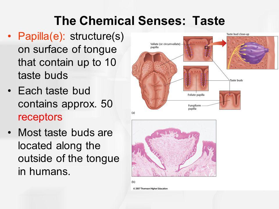 The Chemical Senses: Taste
