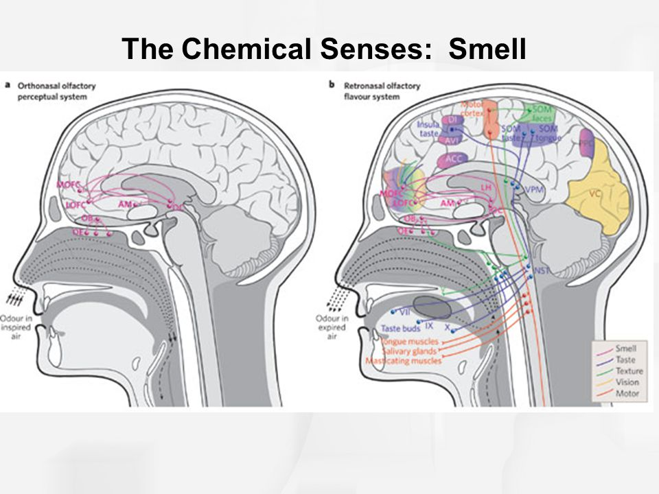 chemical senses Chemical senses publishes original research and review papers on all aspects of chemoreception in both humans and animals an important part.
