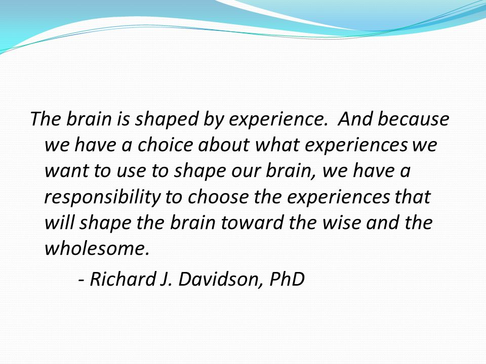 The brain is shaped by experience