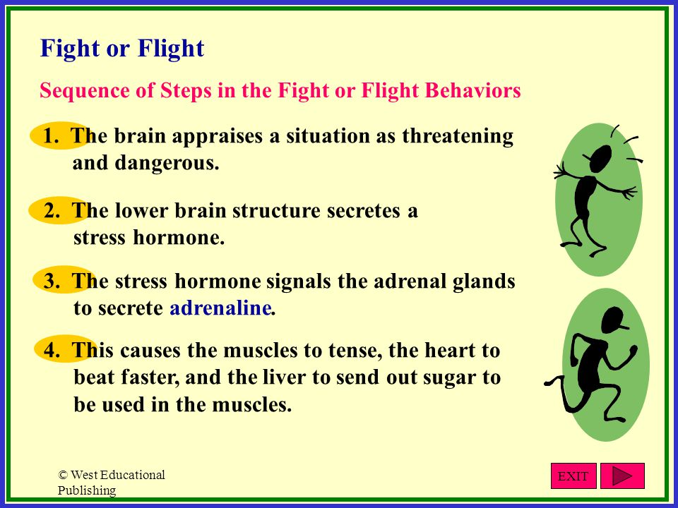 Fight or Flight Sequence of Steps in the Fight or Flight Behaviors