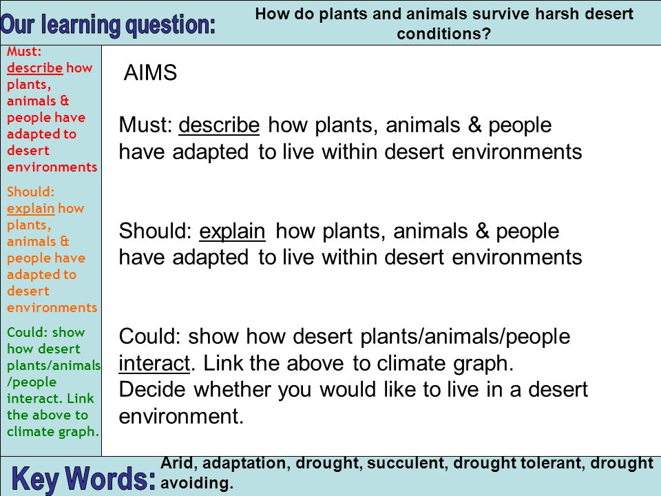 Our learning question: