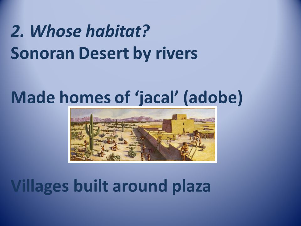 2. Whose habitat Sonoran Desert by rivers Made homes of 'jacal' (adobe) Villages built around plaza