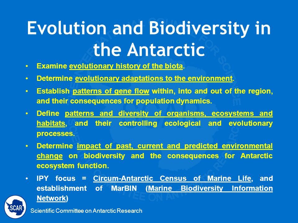 Evolution and Biodiversity in the Antarctic