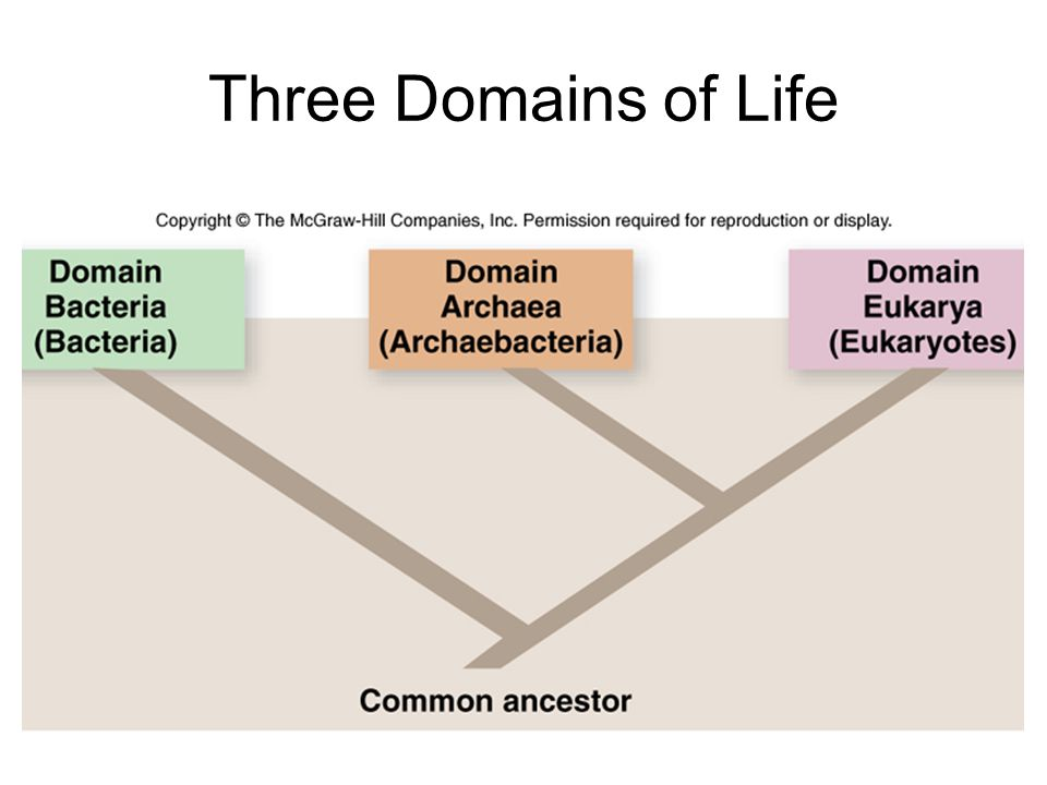 Three Domains of Life Monophyletic; one c.a.