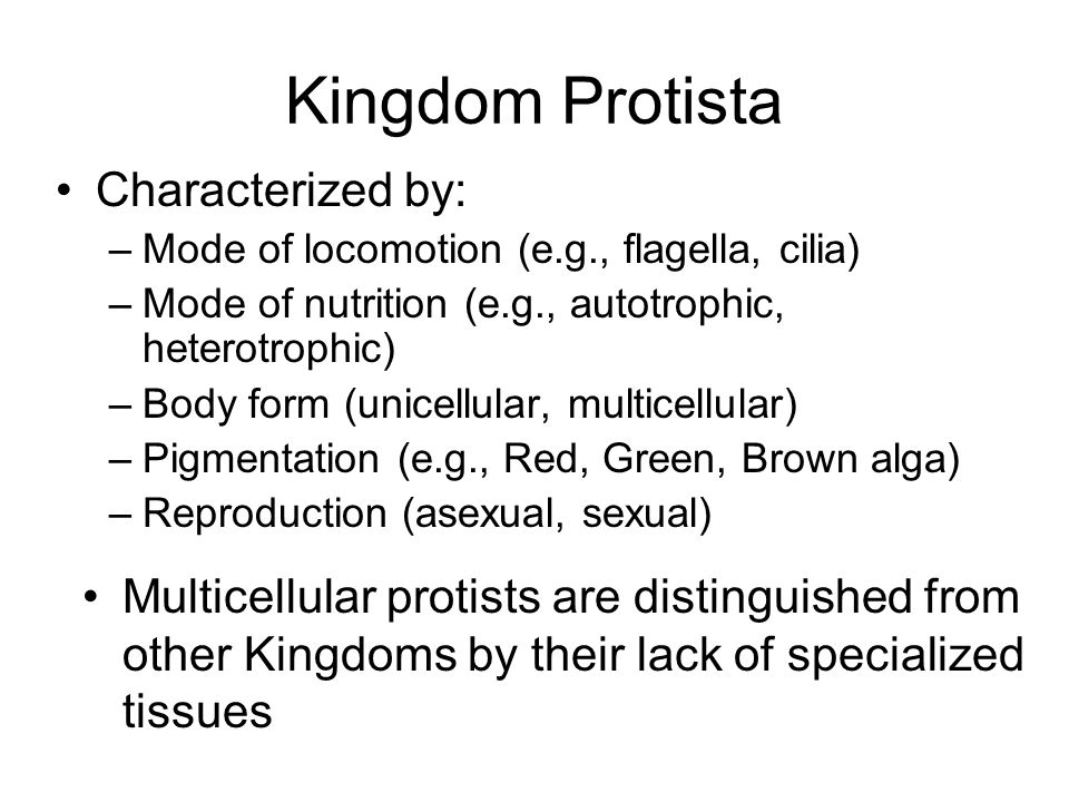 Kingdom Protista Characterized by: