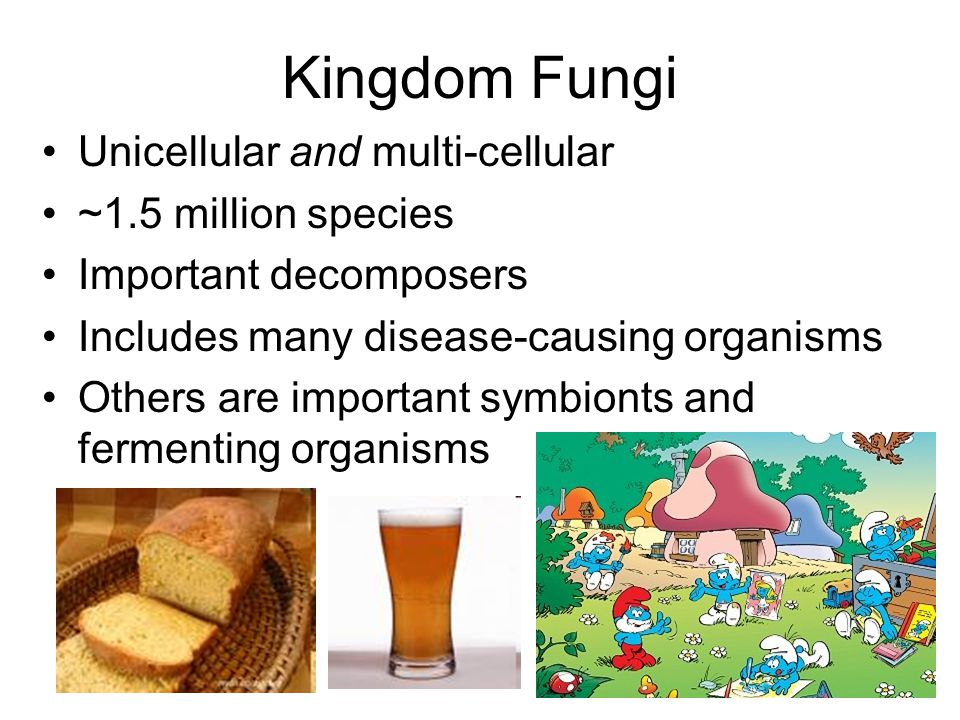 Kingdom Fungi Unicellular and multi-cellular ~1.5 million species