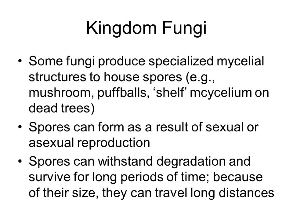 Kingdom Fungi Some fungi produce specialized mycelial structures to house spores (e.g., mushroom, puffballs, 'shelf' mcycelium on dead trees)
