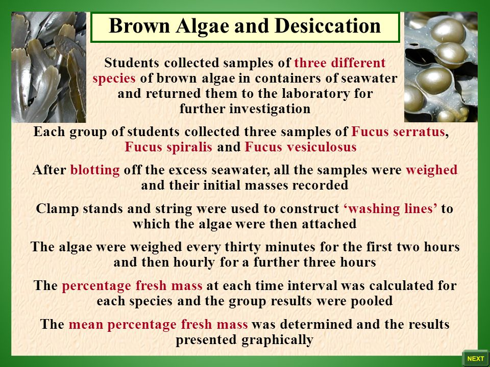 Brown Algae and Desiccation