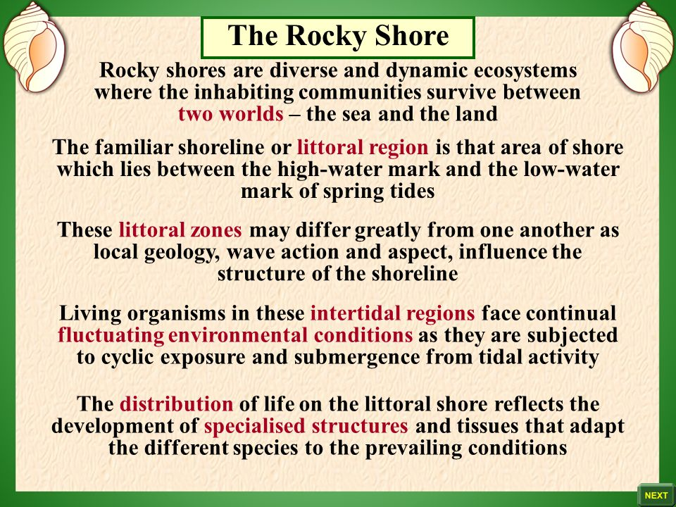 The Rocky Shore Rocky shores are diverse and dynamic ecosystems where the inhabiting communities survive between two worlds – the sea and the land.
