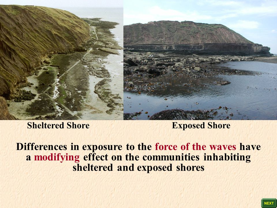 Differences in exposure to the force of the waves have a modifying effect on the communities inhabiting sheltered and exposed shores
