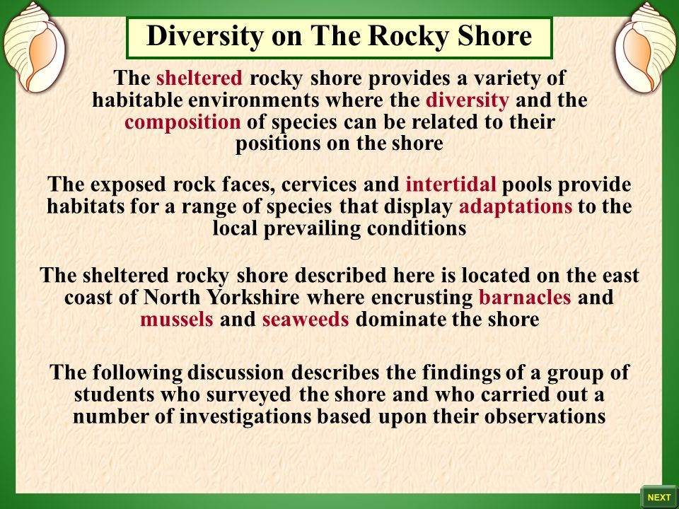 Diversity on The Rocky Shore
