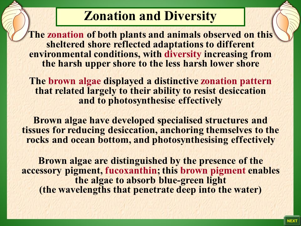 Zonation and Diversity