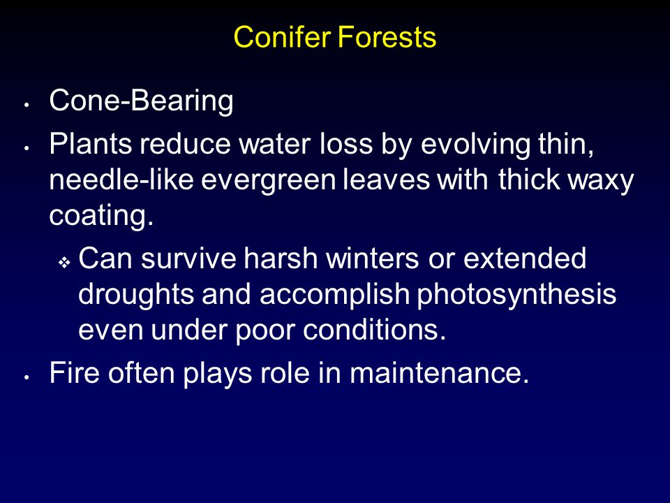 Conifer Forests Cone-Bearing. Plants reduce water loss by evolving thin, needle-like evergreen leaves with thick waxy coating.