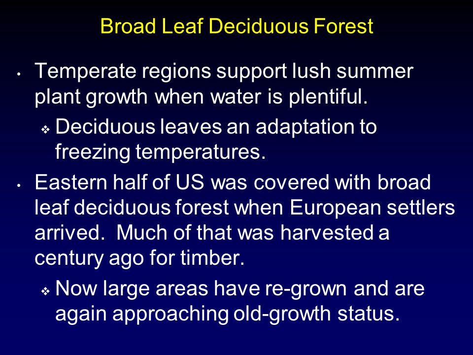 Broad Leaf Deciduous Forest