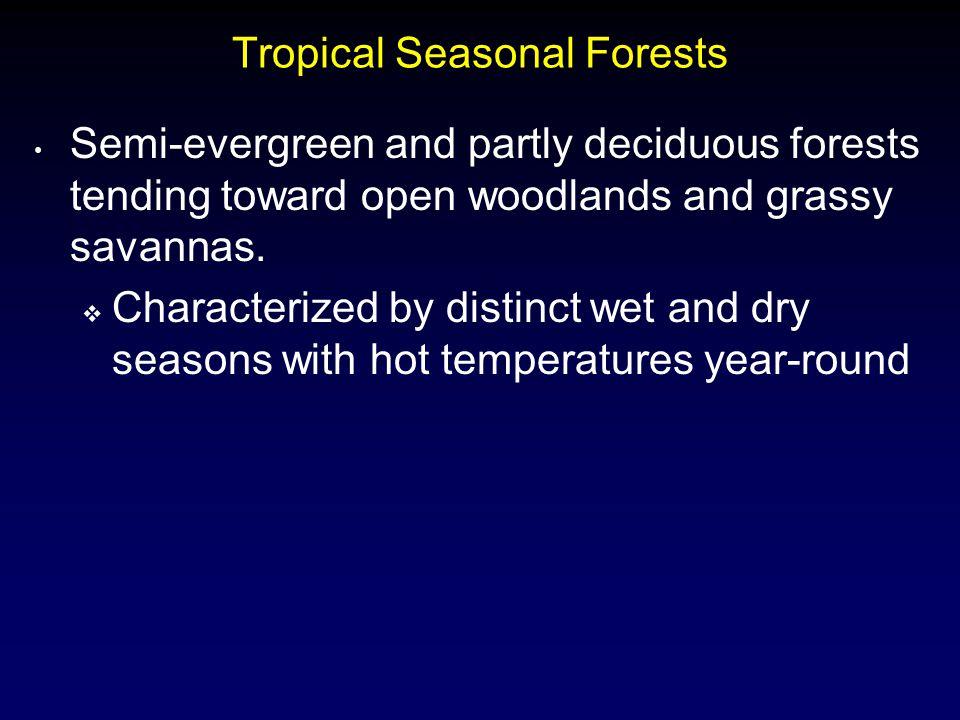Tropical Seasonal Forests