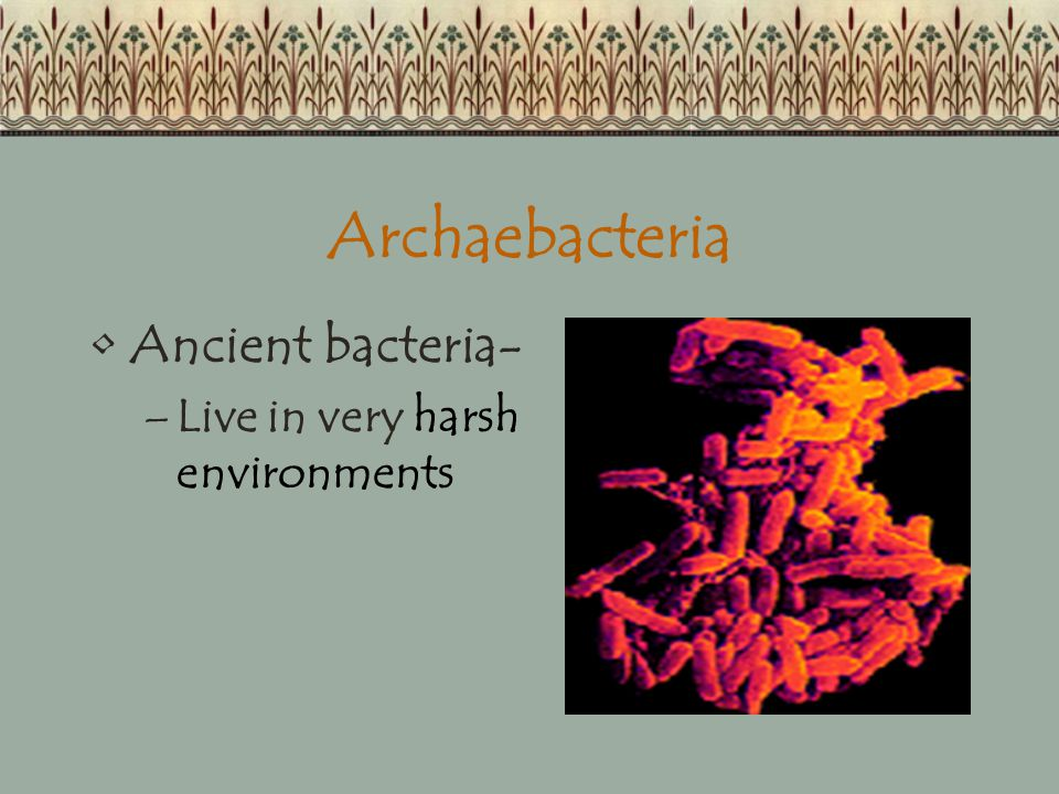 Archaebacteria Ancient bacteria- Live in very harsh environments