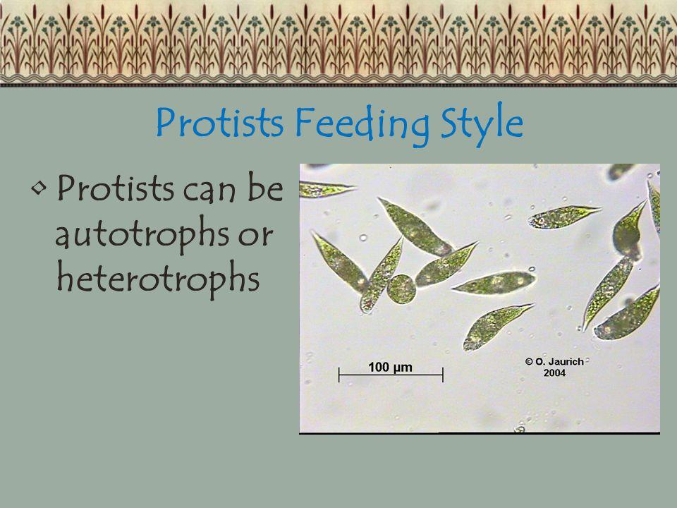 Protists Feeding Style