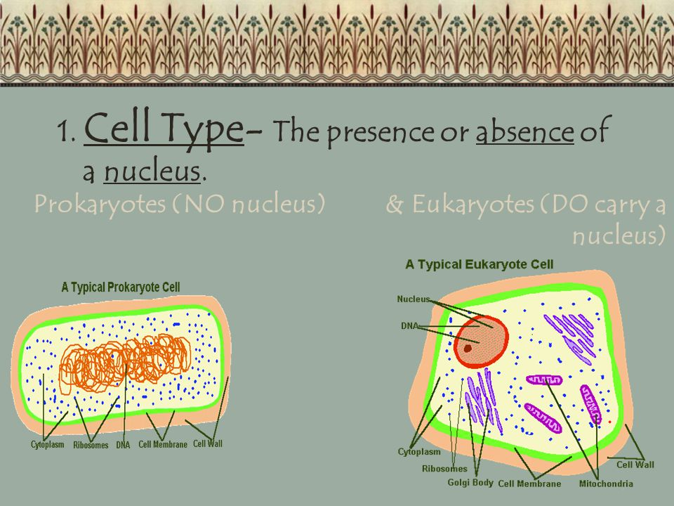 1. Cell Type- The presence or absence of a nucleus.