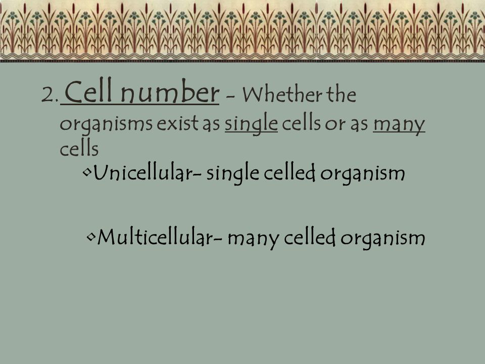 2. Cell number - Whether the organisms exist as single cells or as many cells