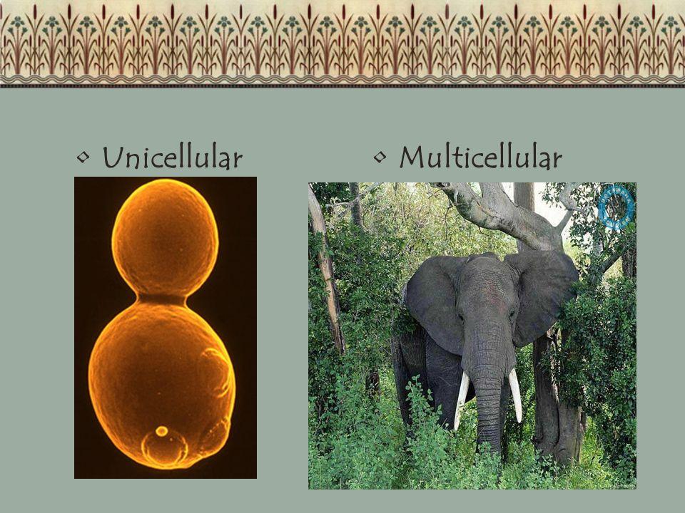 Unicellular Multicellular