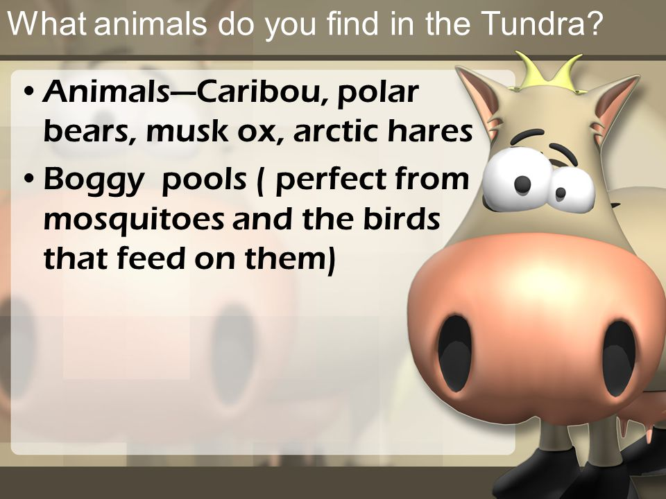 What animals do you find in the Tundra