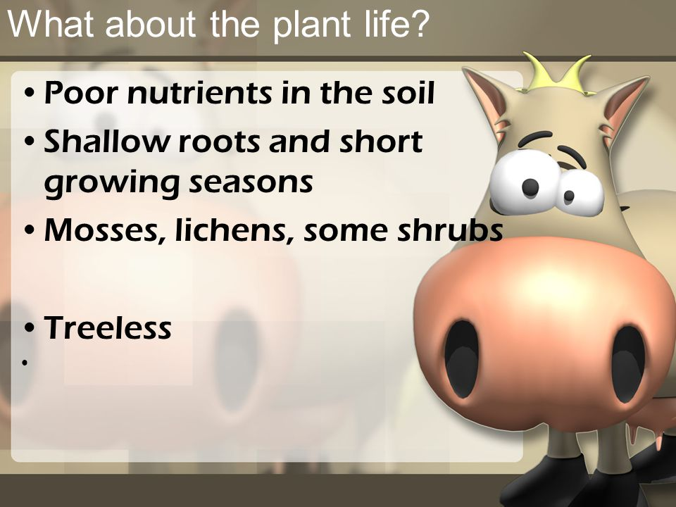 What about the plant life