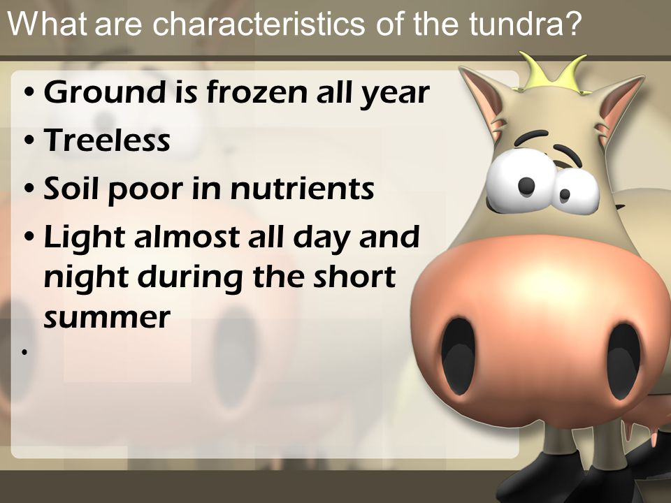 What are characteristics of the tundra