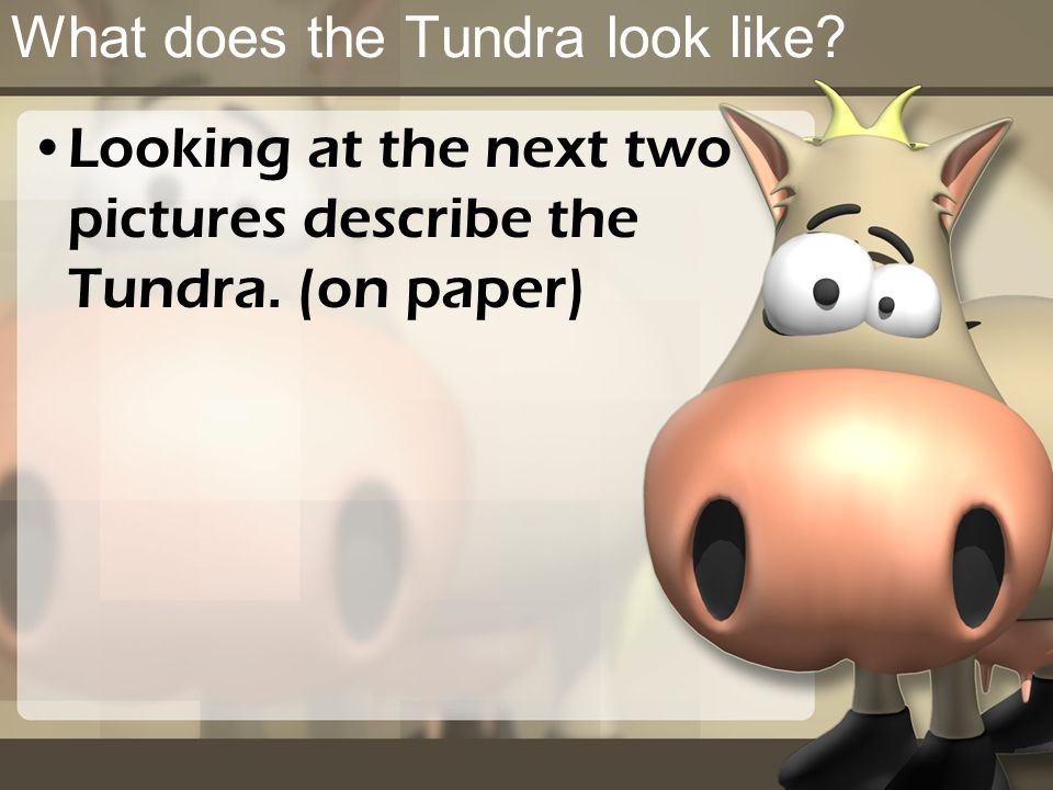 What does the Tundra look like