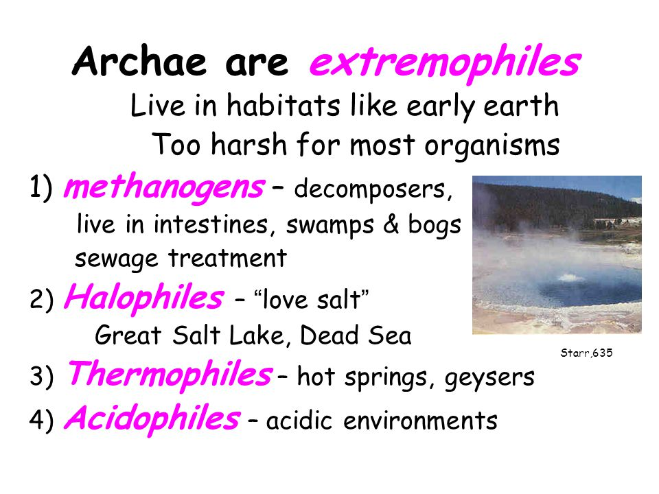 Archae are extremophiles