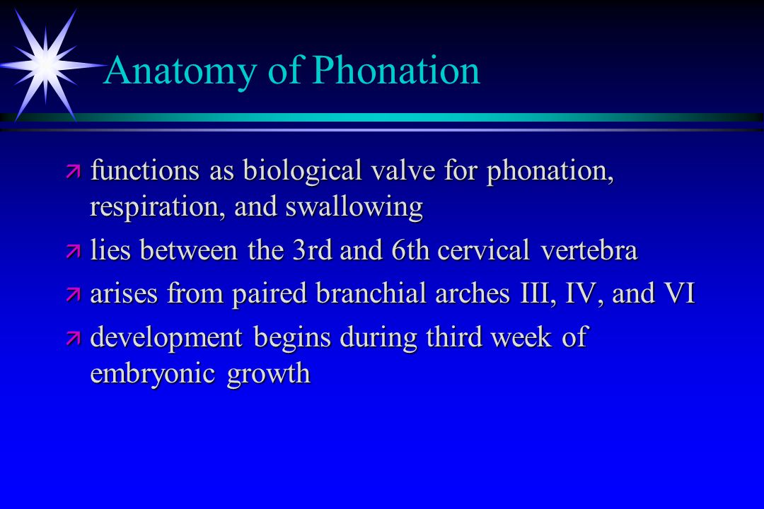 Anatomy of Phonation functions as biological valve for phonation, respiration, and swallowing. lies between the 3rd and 6th cervical vertebra.