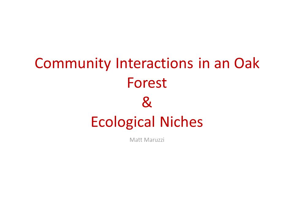 Community Interactions in an Oak Forest & Ecological Niches