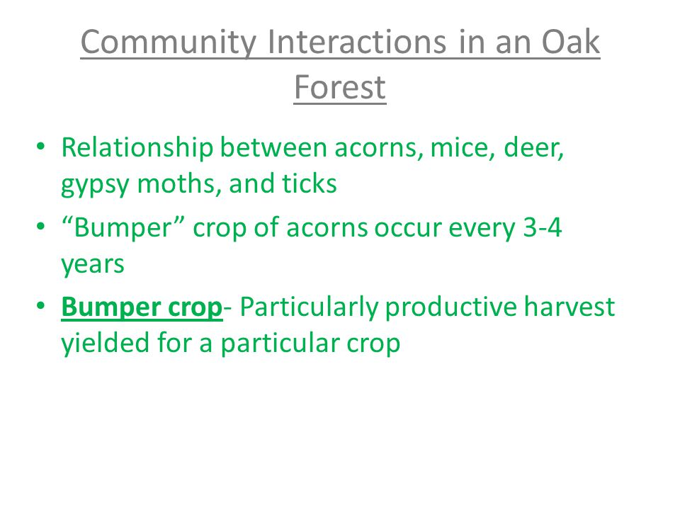 Community Interactions in an Oak Forest